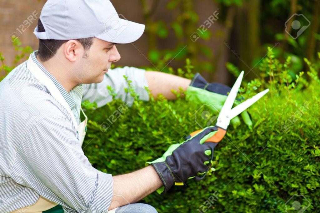 La imagen tiene un atributo ALT vacío; su nombre de archivo es jardineros-en-cartagena-1024x682.jpg